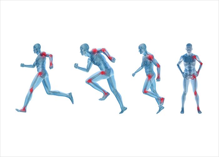 Luud, liigesed ja lihased – keha liikumise võti